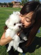 ☆金子由実のブログ〜LOVE アリゾナ&マルチーズ☆