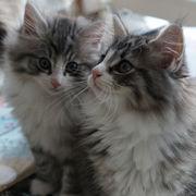 Cattery ESUESUのブログ
