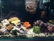 ヘッポコがくの海水魚の日記