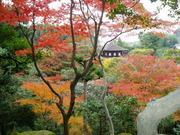 京都観光 おすすめ ブログ
