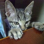 Rimuru**布小物と猫の気まぐれハンドメイド日記