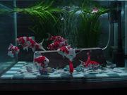 金魚とビオトープのブログ