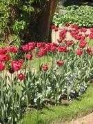 植物と暮らす―夢のばけねこ邸―