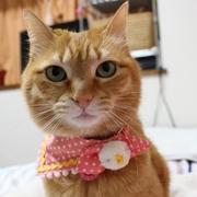茶トラ猫・ウェルのツンデレ日記