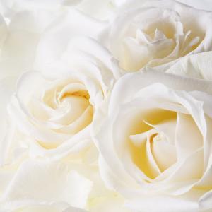薔薇をガーデニング。ベランダでお茶会をしましょう。