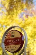 ぶらり横浜♪鎌倉♪湘南