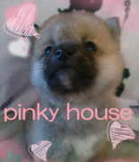 繁殖犬舎 ピンキーハウス