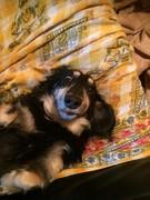 愛犬レオンの日常 里親になった幸せ