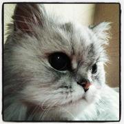 腎不全の老猫と生きる