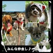 犬猫多頭ライフ&闘病日記
