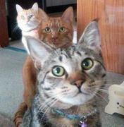 ゲームと猫とたまにPhoto