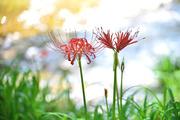 """""""四季巡彩"""" 移ろいゆく自然美を求めて-"""