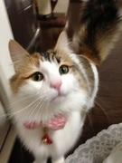 猫とずぼら嫁日記