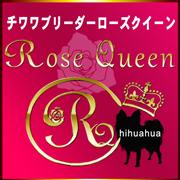Rose Queen チワワブリーダー