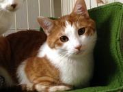 猫の生活 お試しと紹介 猫と人との生活応援団