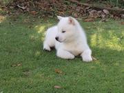 北海道犬とともに