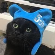 黒猫レオンの日々