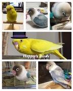 鳥さんの幸せ