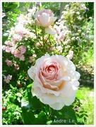 小さな庭で花と緑につつまれた暮らし