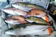 初心者でも釣れる!釣りと釣り具のブログ