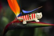 Cat lover members club  家猫と一緒!
