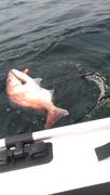 ス−の安上がりな魚釣り