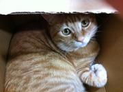 いぬ猫フェレット&人間