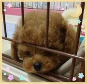 too-cute