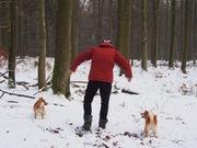 柴犬とオランダ人と。