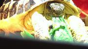 ニシヘルマンリクガメとお金大好き!おばちゃん日記