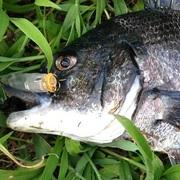 瀬戸内 しまなみ沿岸の釣り