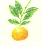 橙色だから大丈夫〜子宮頸癌と育児の記録
