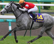 中央、南関東競馬の高確率予想