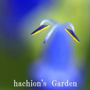 hachion's Garden