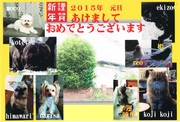 Mr.misterのBlog 「ペット子育て奮闘記」