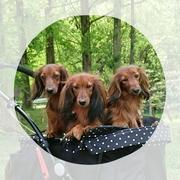 ヴォンネの本音 〜犬と暮らす日々〜