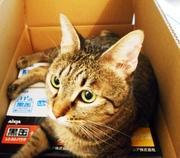 猫のための小さなお家