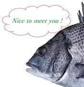 釣りたいんや!