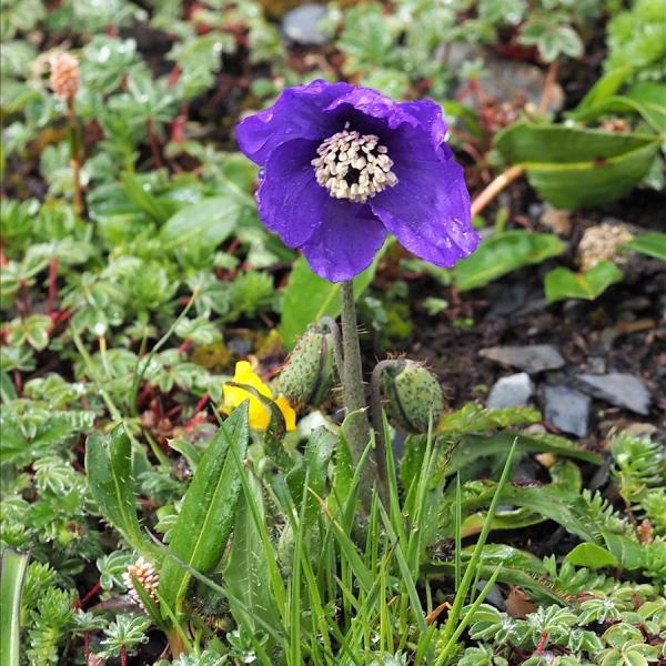 山の花は友達さんのプロフィール