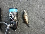 何でも釣りブログ by naosuke