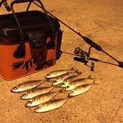 Feel free to fish