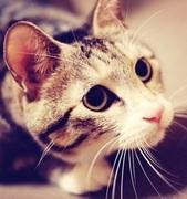 不思議な猫トラのブログ