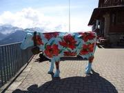 スイスの教育エトセトラ+