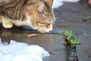 Gatto-libero ・・・ 自由な猫
