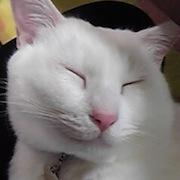青眼白龍・・・猫にメロメロ
