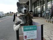 柴犬・秋田犬と猫のドタバタ生活と糖尿病1型闘病日記