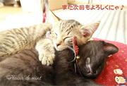 Plaisir de mint 岩手盛岡Photoと猫と毎日笑顔になる