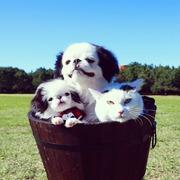 たらちゃんといくらちゃん同じ柄の犬と猫