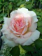 革・帆布ときどき花