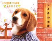 犬のしつけ教室Cocoro-今日もこころは犬日和